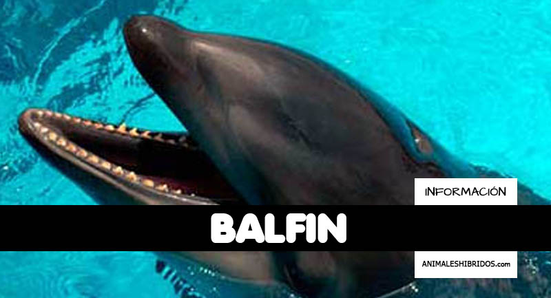 BALFÍN