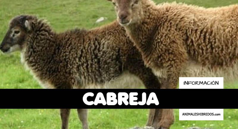 CABREJA