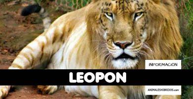 LEOPÓN
